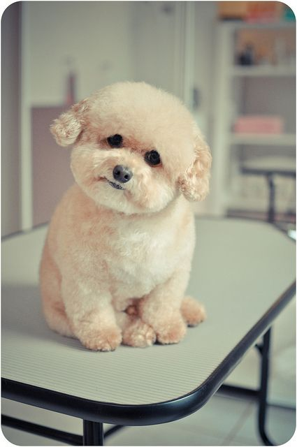 Now this is a cute puppy!