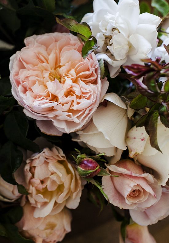 heirloom roses.