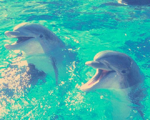 Dolphins ?