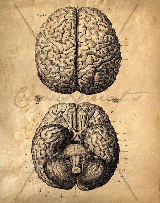 Brains are so cool. Vintage Anatomy Brains