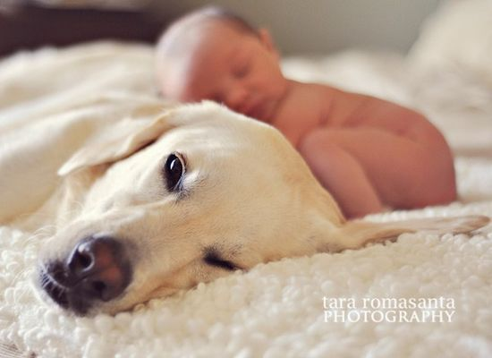 Cute photo of dog and baby