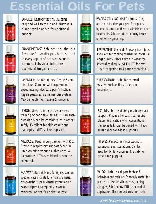 Essential Oils for pets/dogs