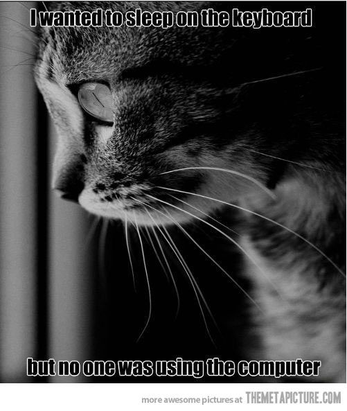 funny-cat-black-and-white-photo