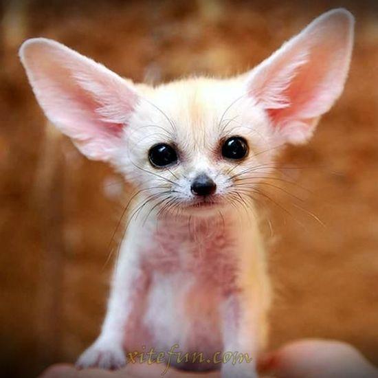 Cute Baby Animals : Cute Babies
