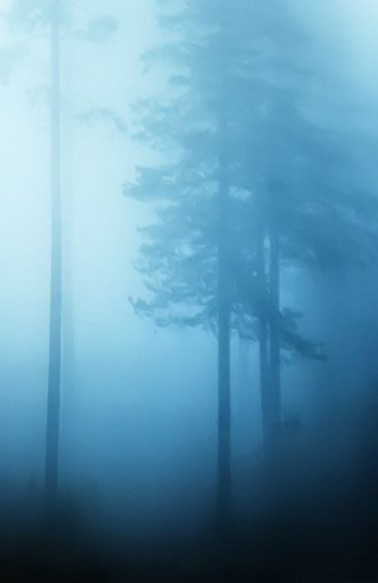 ? Missing in the blue tree forest
