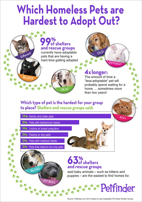 "Learn more about how you can #help pets on Petfinder.com  s #ALAPW page!  Adopt a Less Adoptable Pet Week was last week, but don't forget about these ""less adoptables"" the rest of the year!"