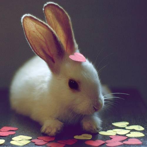 bunny bunny bunny bunny