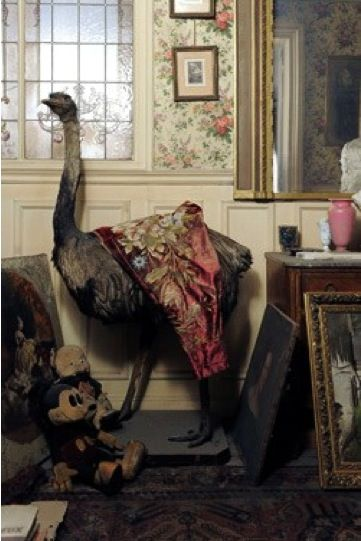 ostrich from the capsule apartment in Paris France