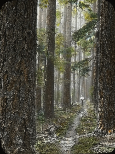 typical Oregon forest: