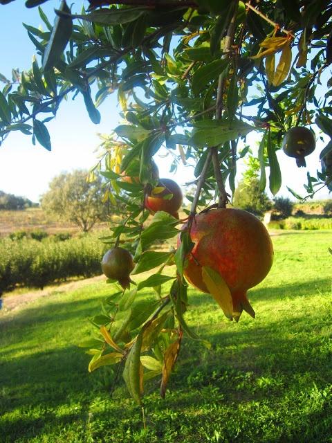 California Pomegranate