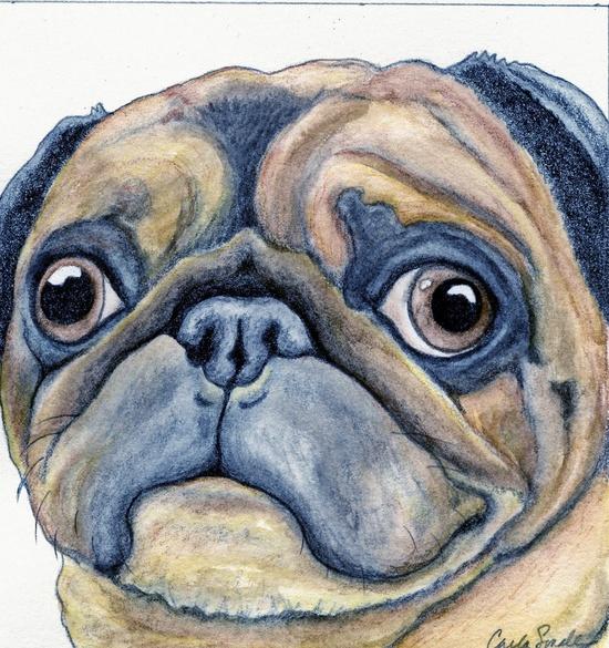 Custom Pet Portrait Original Drawing 3 x 4  Dog Art Pencil Painting -Carla Smale