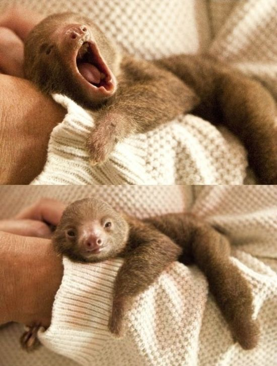You guys like baby sloths, right? - Imgur