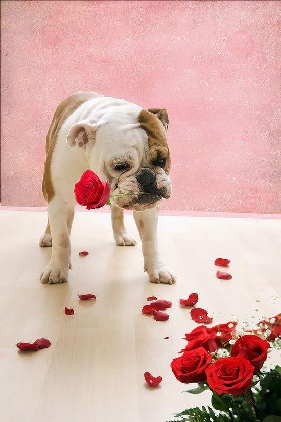 ? Puppy Love