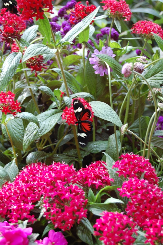 Butterfly Jungle at the wild animal park in San Diego