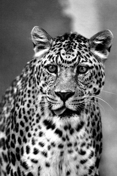 #wild #animals