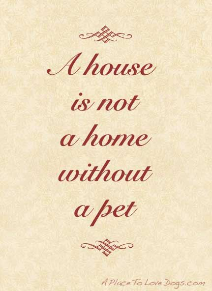 a house is not a home without a pet