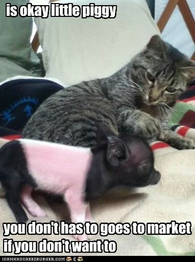 Little Pig - Funny #family photos #funnny photos #amazing photos #death metal piano