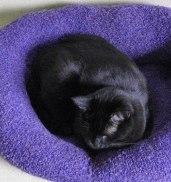 Have sweaters you don't wear anymore or that have an unfortunate stain or hole? Pet Project turns them into sweater pet beds! #animals #animalpictures #animal