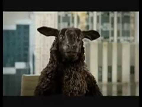 Story Of The Black Sheep