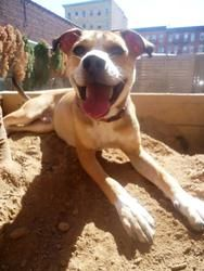 Paul Stephen Rudd is an adoptable Shepherd Dog in Jersey City, NJ. Paul Stephen Rudd is still waiting for his family. Its been a long time, since Aug 2012. He is a 1 year old hound/shepherd mix. He's ...