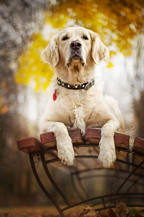 Fall Dog