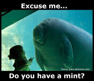 funny Aquarium Manatee Meets Little Girl photo