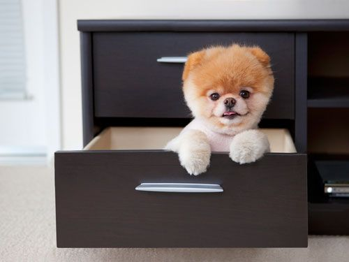 An Interview With Boo: The Worlds Cutest Dog, could he be much cuter?