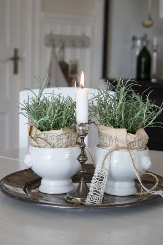 rosemary pots