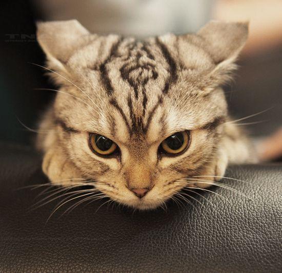 cat ~ that look!