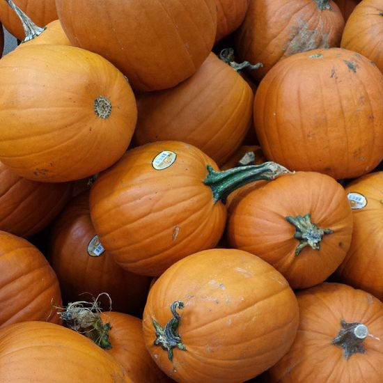 Check out the pumpkin patch at your local Home Depot store!