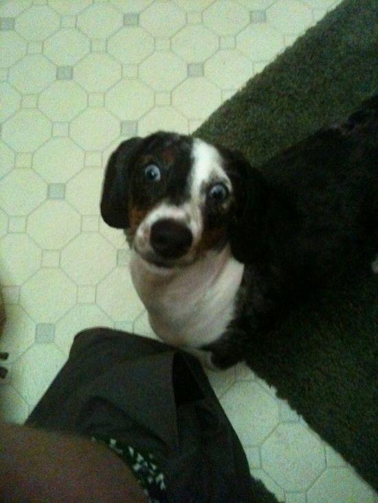 Apollo, my sweet baby dog