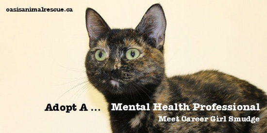 Adopt a cat. They're great for your mental health! Smudge is looking for a new home. oasisanimalrescue.ca
