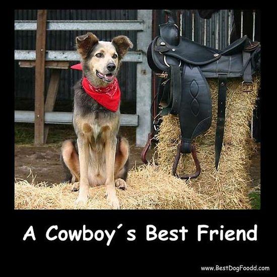 #dog - Cowboy´s best friend