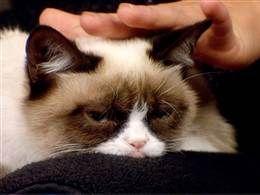Meet 'Tardar Sauce,' the grumpy cat gone viral (Photo: TODAY)