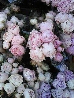 let me fall into these peonies