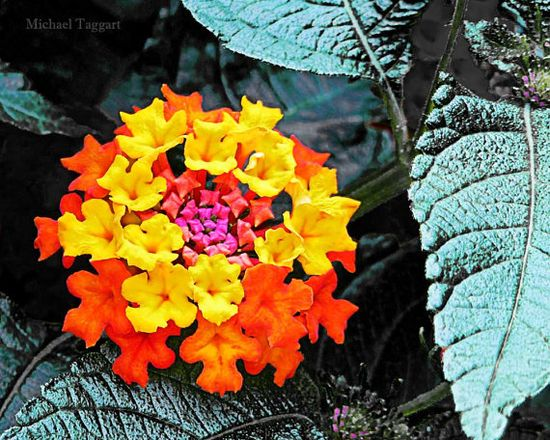 Ring Around the Rosie Amazing Pictures by AmazingPicturesByMTP, #flowers #photography $12.00