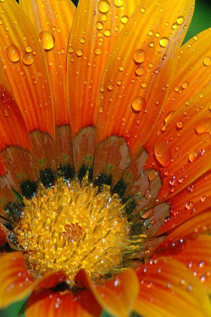 flower...
