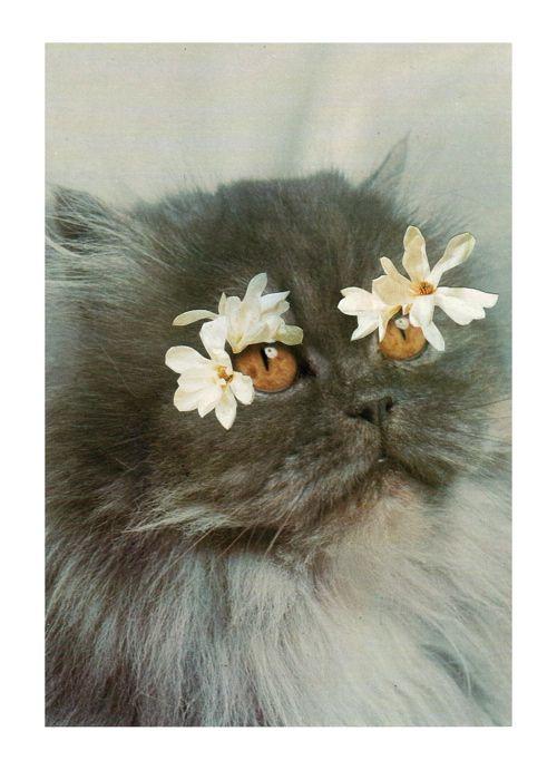 cat accessorised