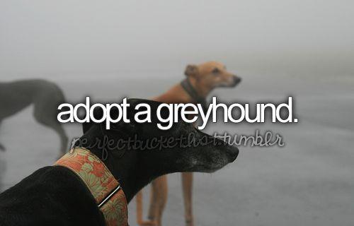 Adopt a #pet girl #Cute pet