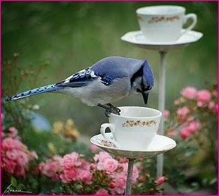 ~ teacup bird feeders