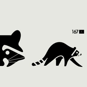 Raccoon Illustration / Arapaho Skateboards by surplus design