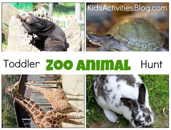 take your kids on an animal hunt the next time you go to the zoo