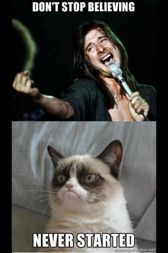 I can't get enough of grumpy cat!
