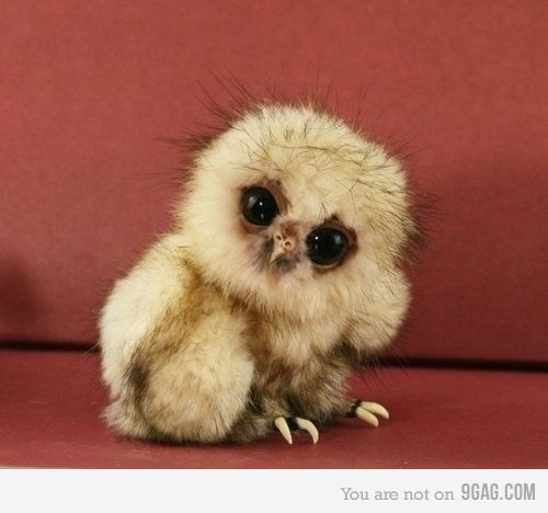 little baby owl baby baby baby  :)  I WANT ONE!