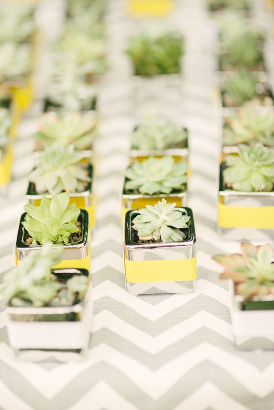 Love these little succulent wedding favors! So creative! Honey Honey Photography. www.wedsociety.com #wedding #favors