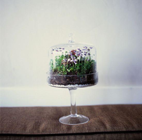 adorable cake stand terrarium