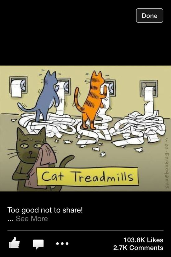 #funny #cats #treadmill #workout