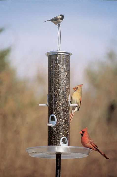Wild bird habitat.