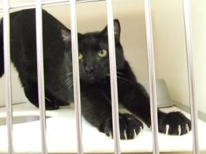 187091 is an adoptable Domestic Short Hair Cat in Columbia, SC. Animals are adopted on a first come basis and cannot be held back from a potential home, so please come to the shelter to see them. All ...