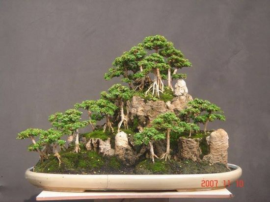 I love bonsai that are an oasis of their own